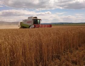 Výnos bio pšenice v roku 2020